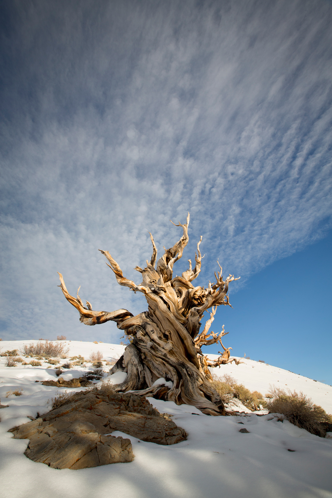 Eastern-Sierras-Winter-2016-Nature Photographer